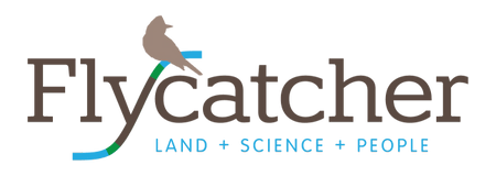 Flycatcher LLC