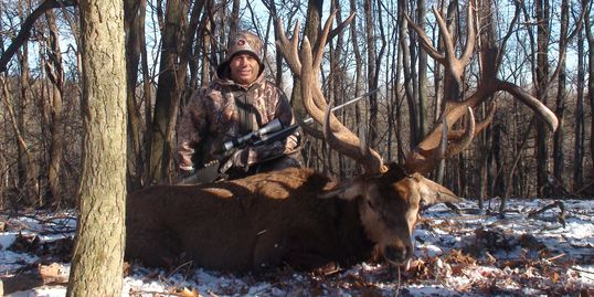 A trophy class Red Stag harvested by a Shilo Ranch hunter.