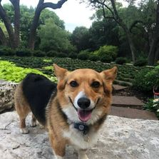 Austin Dog Walking: The Sporty Dog
