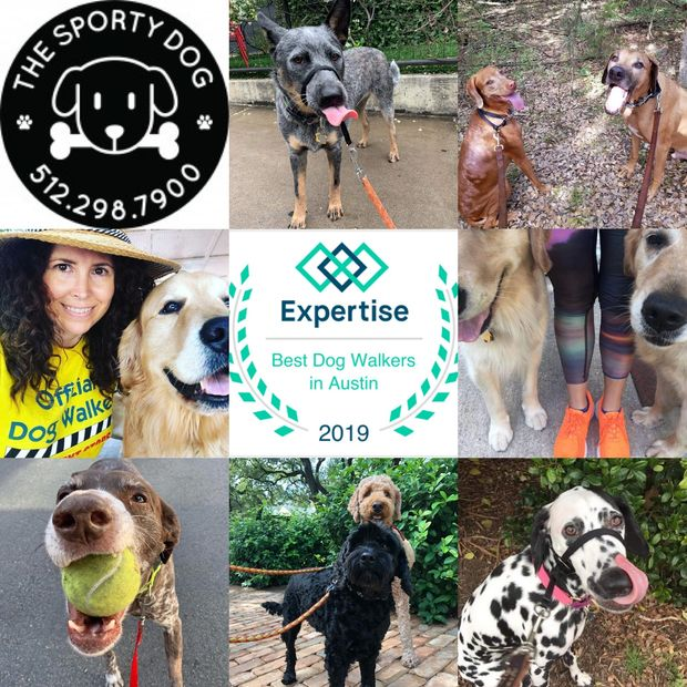 best dog walkers in austin: the sporty dog