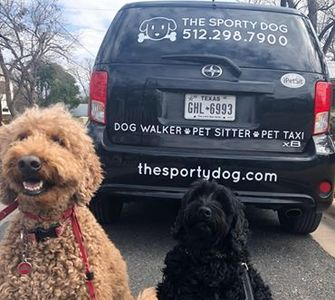 austin dog walking + austin pet taxi: the sporty dog on the go