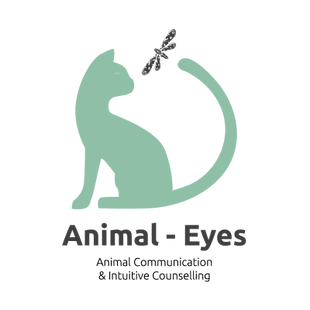 Animal Eyes Intuitive Communication Tammy de Oliveira