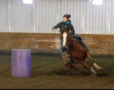 OTTB Mare Barrel Racing. Shelbie Sibbald of SMS Performance Horses