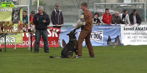 Sire: Aknel- Black Sable German Shepherd World competitor