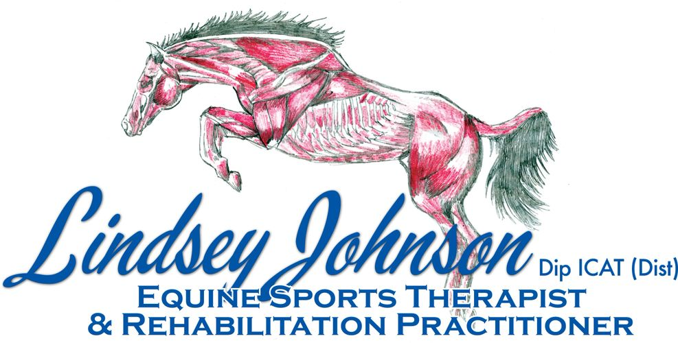 Horses muscles, equine therapist, rehab practitioner, sports therapist, massage, stretches
