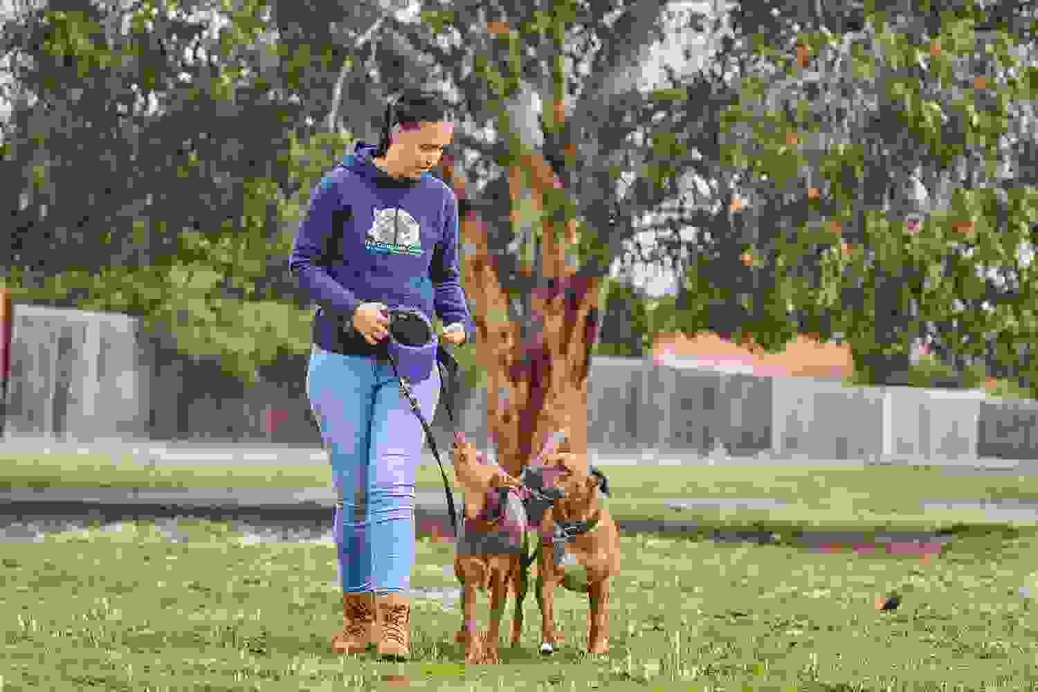 Dog training, loose lead walking, Lenyx & Zelda, obedience class