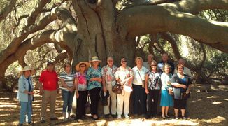 The Great Oak  Oldest living oak tree