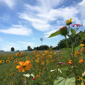 Wildflowers in meadow by windmill at Alum Creek Farm Wedding Venue
