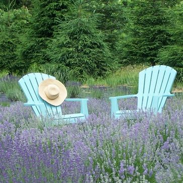 Lavender Farm - Pleasant Valley Lavender