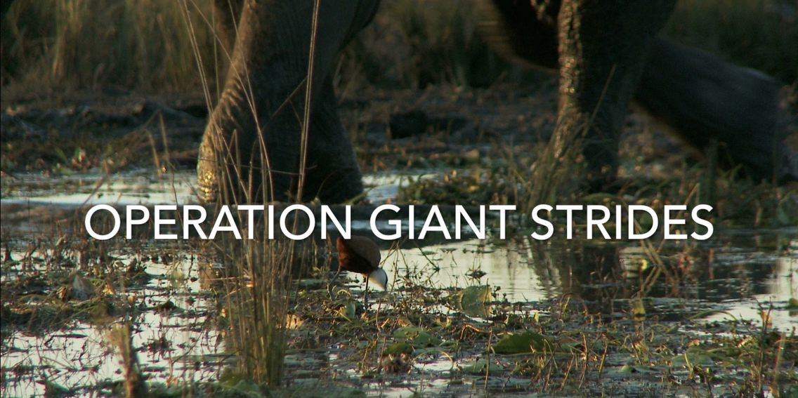 Operation Giant Strides launched by Photography4life