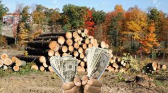 Stack of logs cut, with hands holding wads of money