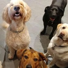 Say Cheese! Happy dogs looking at doggy Daycare staff