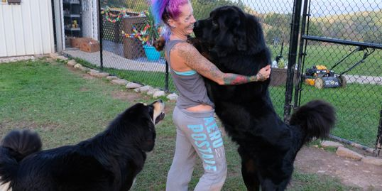 Tibetan Mastiff Bear and Bella with mommy