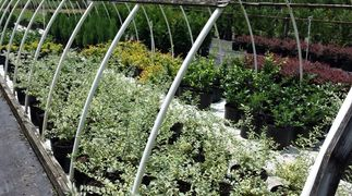 Charlotte Landscaping Plants, Trees, Shrubs, Decorative Grasses