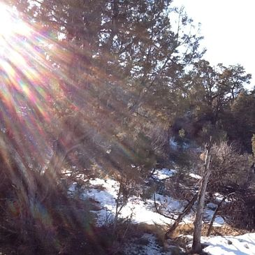 Sun on piñon juniper woodland.