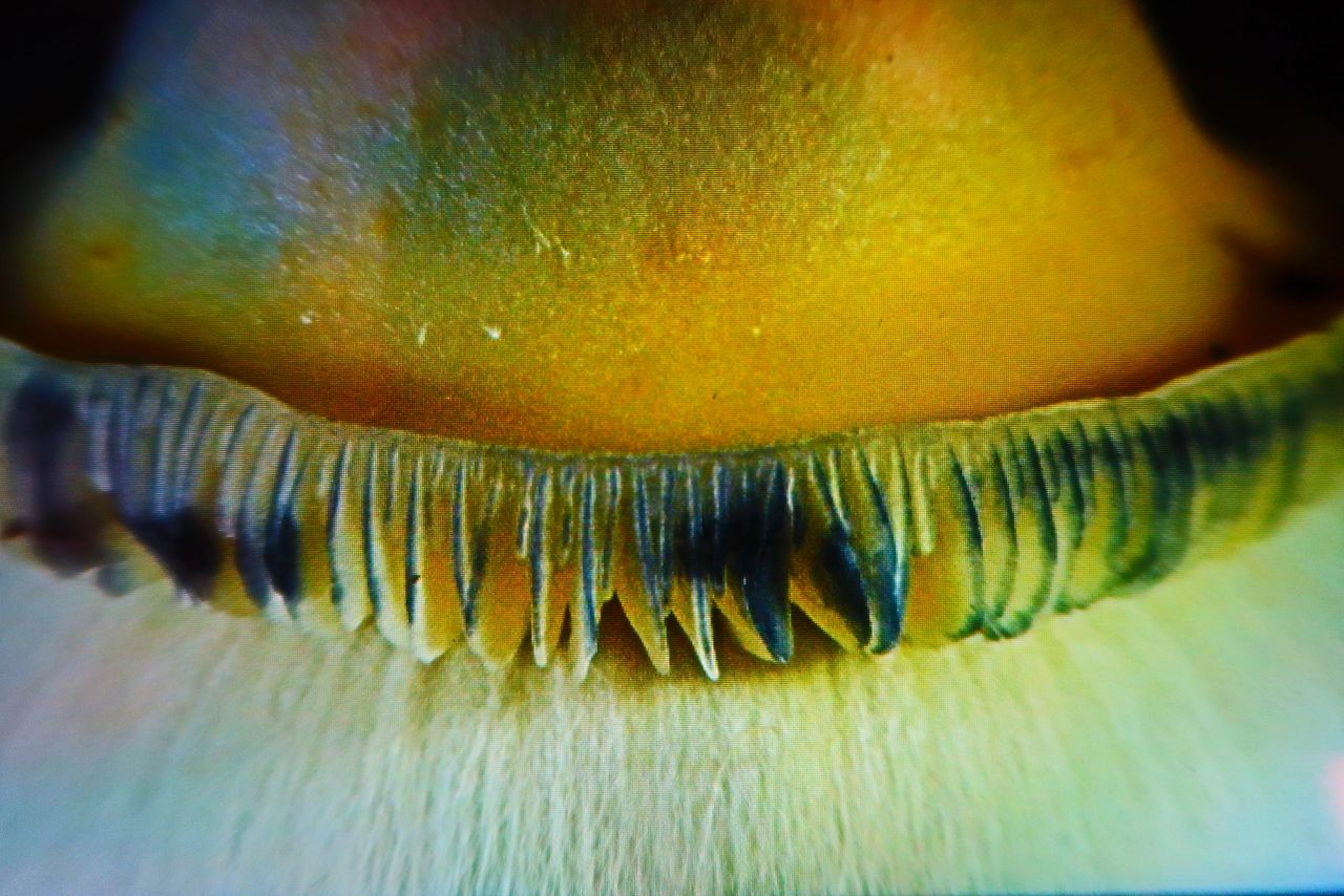 Cap & Gills of an A.P.E mushroom under the Andonstar 302 Stage Microscope