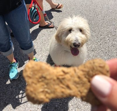 Beer grain dog treats; The Crafted Bone