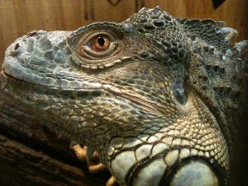 Reptile Rescue - The Jasper Reptile Center
