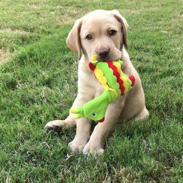 Texas Dog Breeders