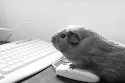 Hamster standing on computer mouse!