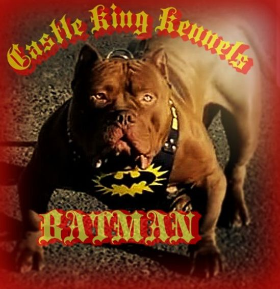 Batman King of Kings