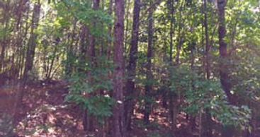 Murray Land and Homes, LLC - Real Estate - Woodville