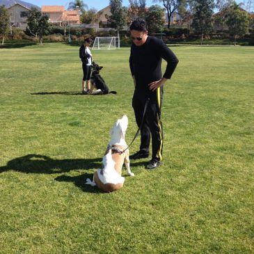 Dog Evolution - Dog Behaviorist, Dog Trainer, Dog Boarding