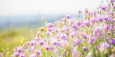 Sunny meadow image for meadow candle