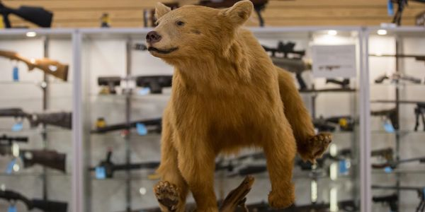 Stuffed bear displayed in gun shop.