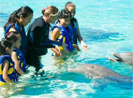 Sea Life Park, Hawaii Gay Family Fun, Oahu LGBT Family Fun, LGBT Family Activities, Gay Family Fun