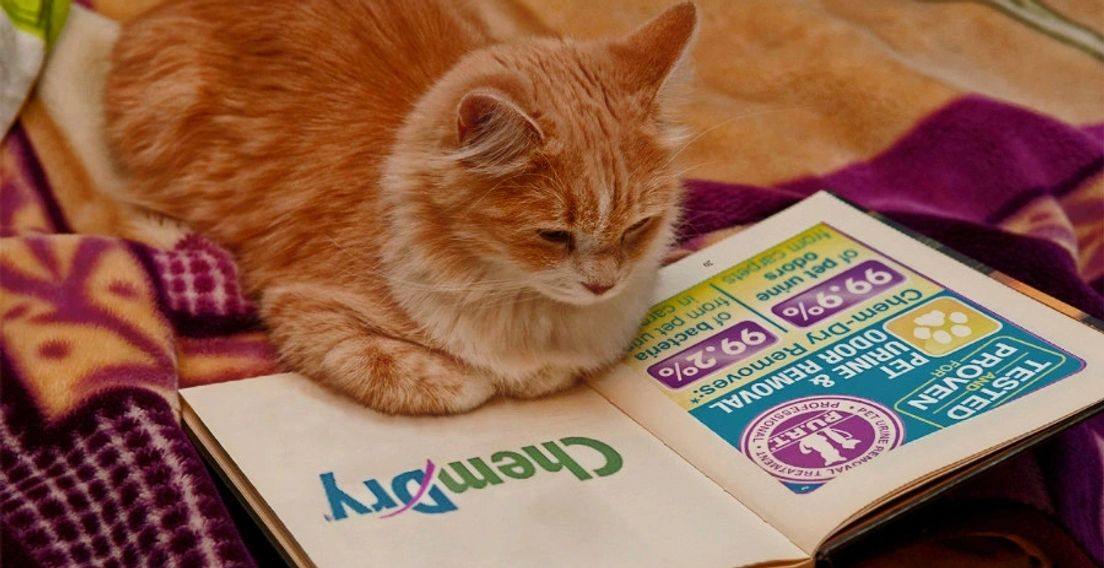 cat reading a book. one page says chem-dry removes pet urine odors. next page shows chem-dry logo.