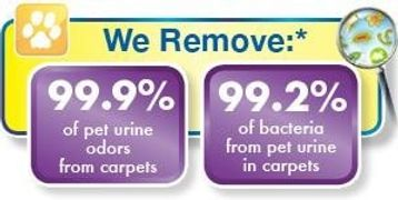we remove 99.9 percent of pet urine odors from carpets