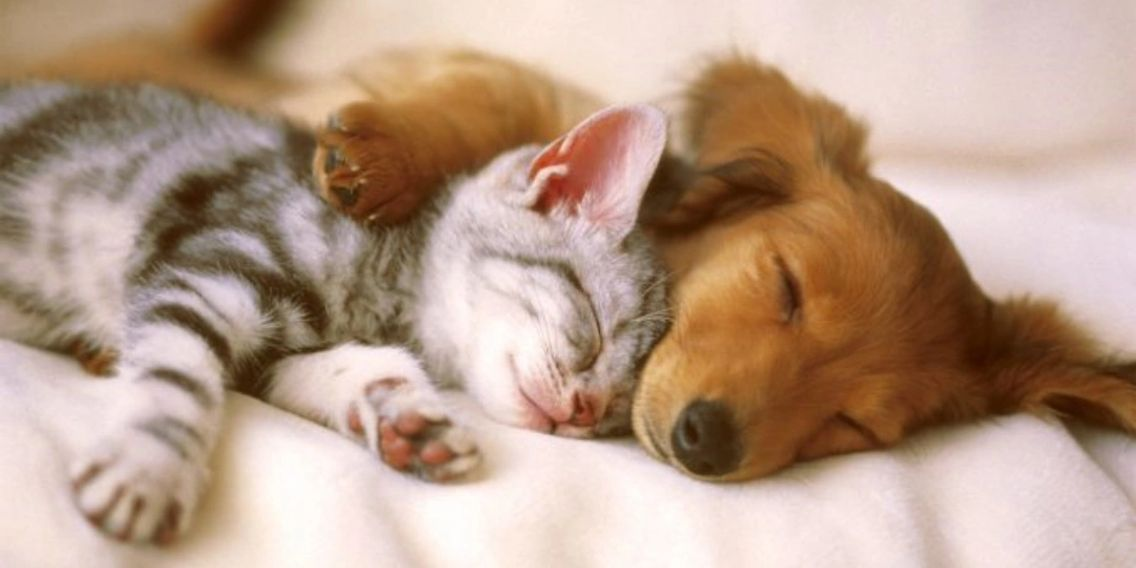 Adorable puppy and kitten taking a nap together while snuggling on clean carpet.