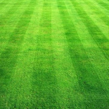 Here is a finely mown lawn.