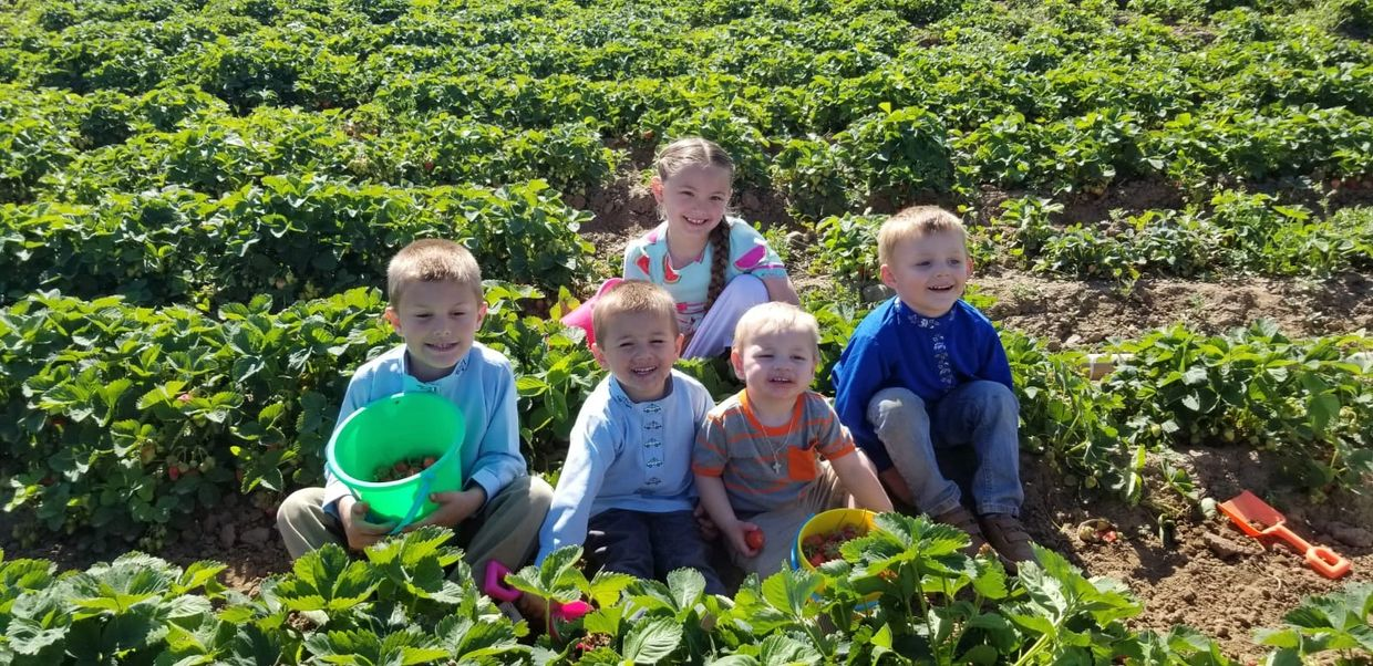 5 of the 10 grand kids picking strawberries