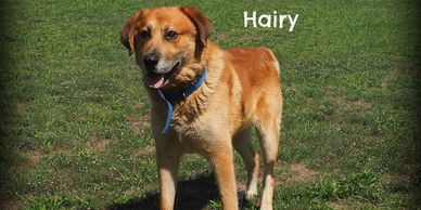 Hairy was adopted in 2016, he was 8 years old