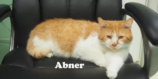 Abners' Big Day - Adopted after spending a year at the shelter