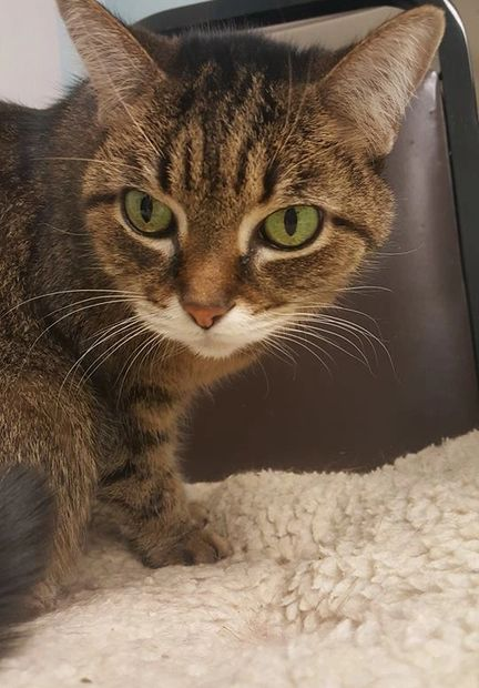 Puss Puss is an older gal. She needs a home that is quiet and gets to lay where she wants to