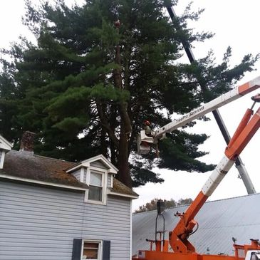 A bucket truck for your tall tree projects.