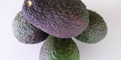 Plenty of Avocado picking  around Childers