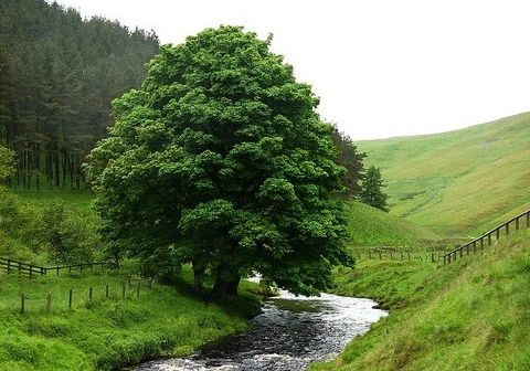 You will be like a tree planted by living waters