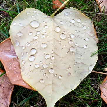 heart lief with water drops