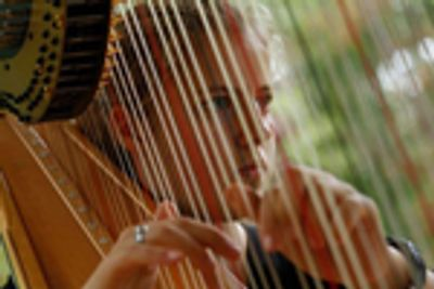 Northern Virginia Harpist