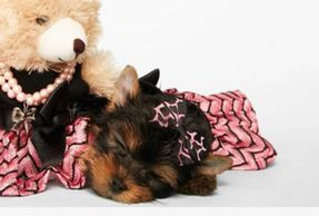 Amazing Paws Boutique is an online pet store providing clothes, pet food, pet supplements, and toys