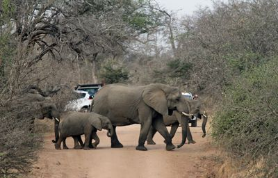 Road Block - African style