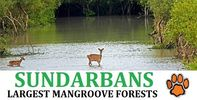 Sundarban Tour Packages