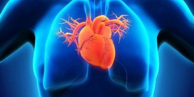 high blood pressure - heart disease - congestive heart failure - mitral valve prolapse - COPD