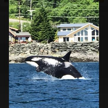 Whale watching and nature cruises in ketchikan alaska