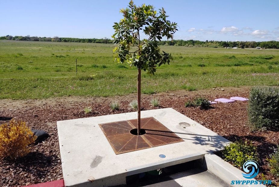 Stormwater Management, Tree Box Filter