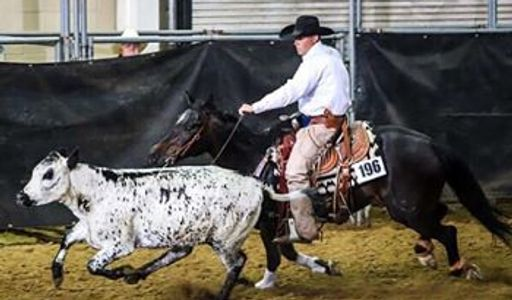 Bryson Wagner, Wagner Training, Equine, Cow horse, ranch versatility, quarter horse, Colorado